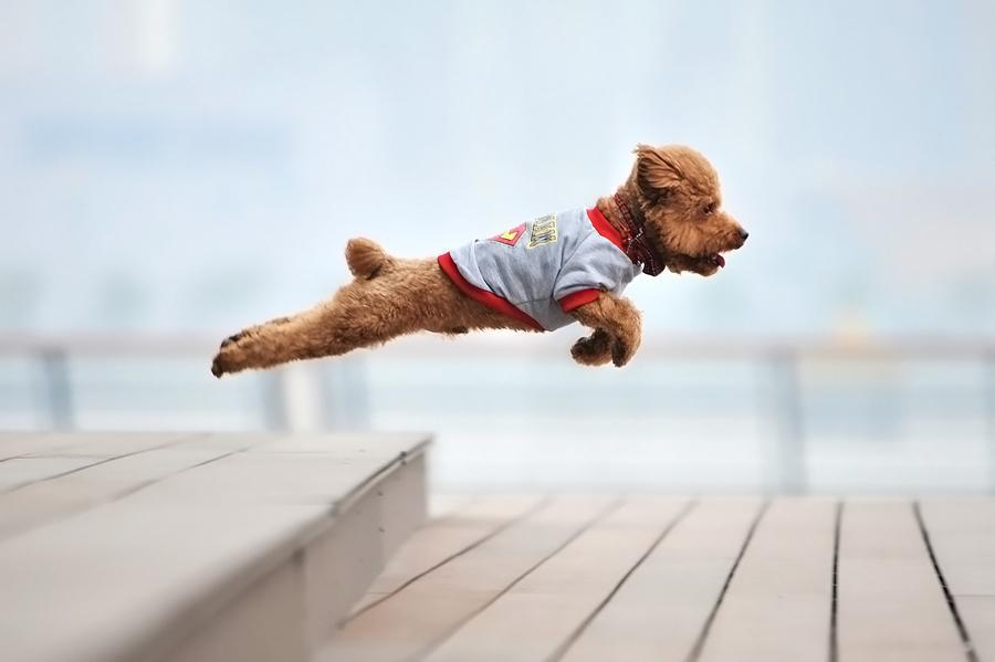 teddy bear doggy jumping