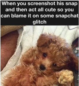snapchat-screenshot-teddy-bear-puppy
