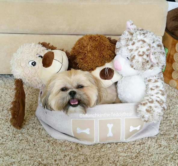 Teddy-Puppy-Basket-Collection