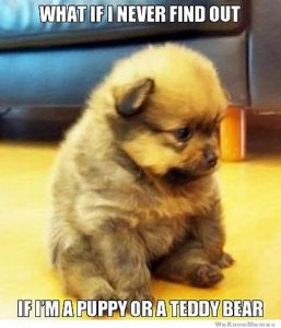 puppy-or-teddy-bear-