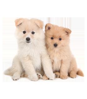 Teddy Bear Puppy Breeds Different Breeds Of Teddy Bear Dog Teddy